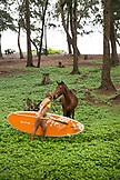USA, Hawaii, The Big Island, paddle boarders and wild horses in Waipio Valley