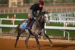 RIYADH,SAUDI ARABIA-FEB 27: Speak in Colours excercises for 1351 Cup at King Abdulaziz Racetrack on February 28,2020 in Riyadh,Saudi Arabia. Kaz Ishida/Eclipse Sportswire/CSM