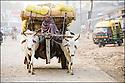 2006- Inde- Varanasi- Commerçant allant au marché.