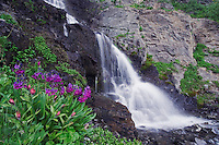 Waterfall and wildflowers in alpine meadow,Parry's Primrose,Primula parryi, Ouray, San Juan Mountains, Rocky Mountains, Colorado, USA