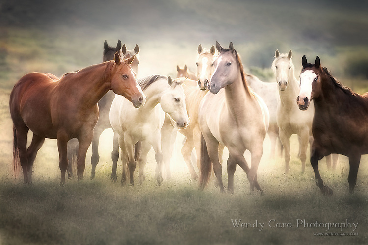Band of horses in a meadow, positioned as if studyng a dance move, with early morning mist, eastern Oregon.