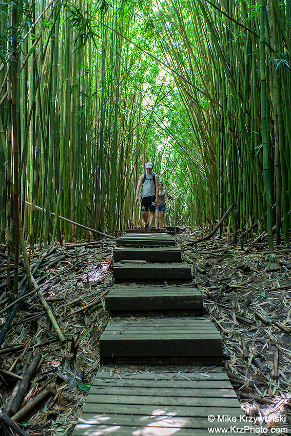 Couple hiking in thick bamboo forest, Pipiwai hiking trail, Haleakala National Park, Kipahulu, Maui