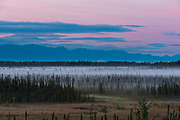 Morning fog over the tundra and taiga of the Matanuska Susitna valley, southcentral, Alaska.