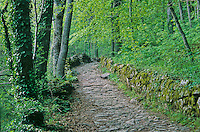 Ancient stone road leads up hill and through forest to sanctuary of La Verna, La Verna, Tuscany, Italy, AGPix_0102.