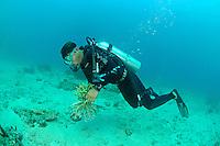Global Coral Reef Alliance, Riff-Gaertner sammelt abgebrochene Korallen ein, Reef gardener collecting broken corals, Pemuteran, Bali, Indonesien, Indopazifik, Bali, Indonesia Asien, Indo-Pacific Ocean, Asia