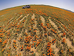 Antelope Valley, California, poppy bloom from the air