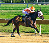 Wildcat Gaze winning at Delaware Park on 10/10/16