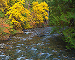 Mount Baker-Snoqualmie National Forest, Washington: Granite creek flowing past autumn colored forest in the North Cascade mountains