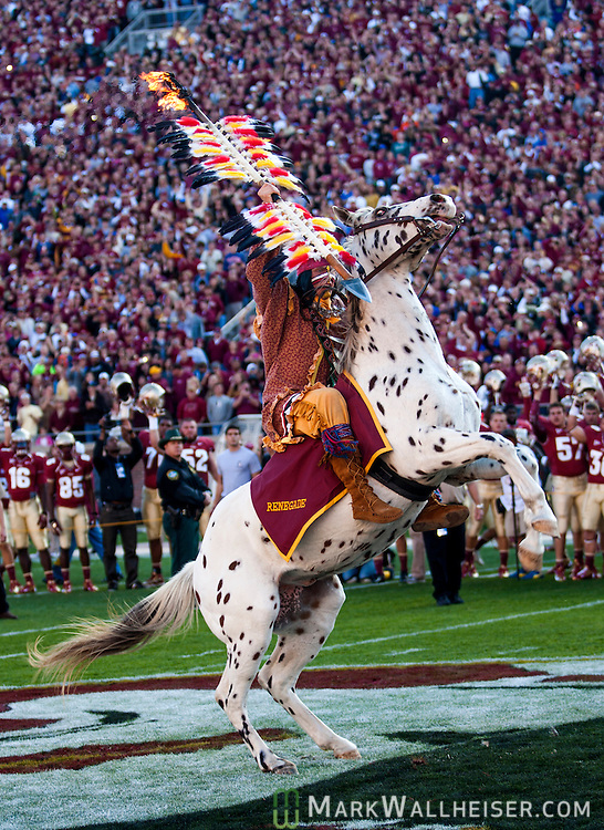 Osceola atop Renegade signal the start of then NCAA football game that saw the 6th ranked University of Florida Gators defeat the 10th ranked Florida State Seminoles 37-26 at Doak S. Campbell Stadium in Tallahassee, Florida Nov. 24, 2012.