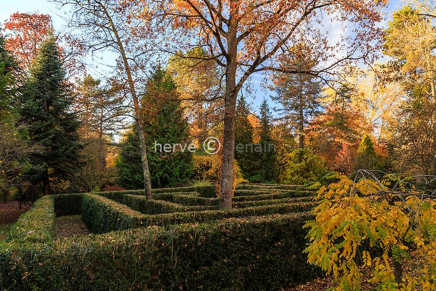 France, Allier (03), Villeneuve-sur-Allier, Arboretum de Balaine en automne, le labyrinthe de buis