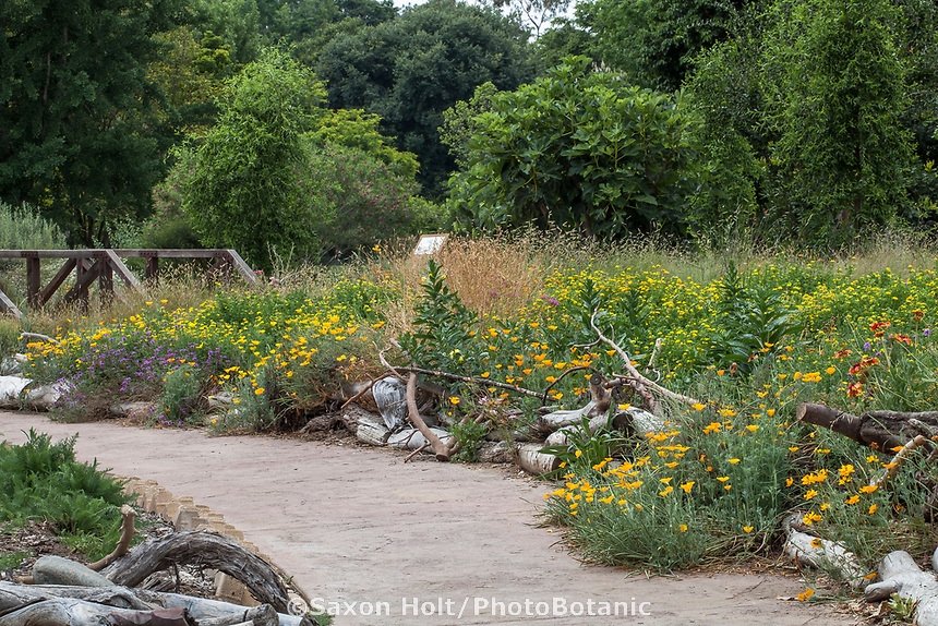 Path through Crescent Farm, sustainable demonstation garden with wildflower meadow and on site recycled green waste branches edging paths; Los Angeles County Arboretum and Botanic Garden