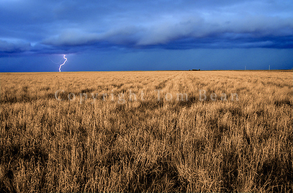Lightning storm over Great Plains grassland of Baca County in Southeast Colorado, AGPix_0259.