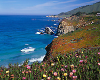 Monterey County, CA<br /> Ice plant blooming at Rocky Point on the Big Sur coastline along the Cabrillo Highway