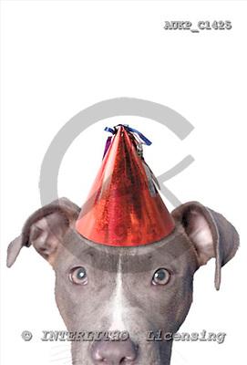 Samantha, ANIMALS,  photos,+dogs,++++,AUKPC1425,#A# Humor, lustig, divertido