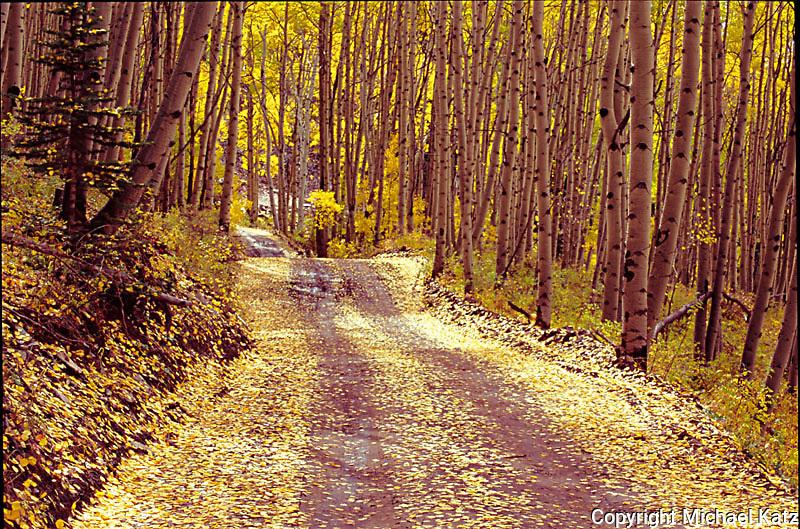 Last Dollar Road, Colorado Rockies