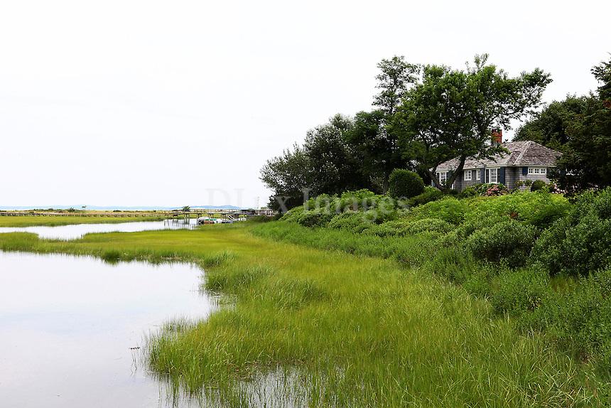 seaside grass
