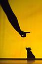 London, UK. 12.03.2014. Pilobolus presents SHADOWLAND at the Peacock Theatre. Photograph © Jane Hobson.
