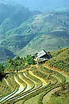 Sapa Ricefields - Flooded, terraced rice fields and farm house in the Lao Chai valley, Sapa, NW Viet Nam