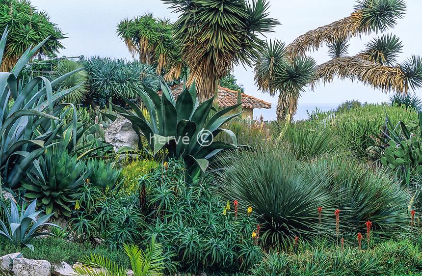 06/ Jardin botanique &quot;Les Cèdres&quot;<br /> Le &quot;jardin mexicain&quot; = jardin de plantes succulentes : agaves (Agave), aloès (Aloe), yuccas (Yucca), Dasylirion, oponces (Opuntia)&hellip;