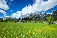 Austria, Styria, Ramsau am Dachstein: spring meadows, at background snowcapped Schladming Tauern mountains | Oesterreich, Steiermark, Ramsau am Dachstein: auf den Wiesen blueht es waehrend das Dachsteingebirge im Hintergrund noch teilweise schneebedeckt ist