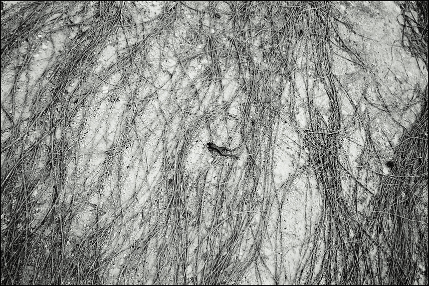The swimmer<br /> From &quot;The other wind&quot; series. Gainesville, FL, 2009