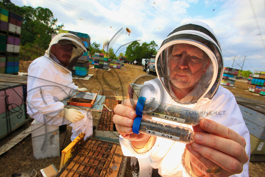 At Bob Harvey&rsquo;s apiary in West Palm Beach, Florida, the team of scientists from the Pennsylvania Department of Agriculture carries out a sampling of bees and larvae and installs the measuring instruments for monitoring thermal and hydrometric variations inside the 12 hives and exterior variations during the journey. 12 control hives remain in FL.<br /> Jeff Pettis holds in his hand samplings from the bees.