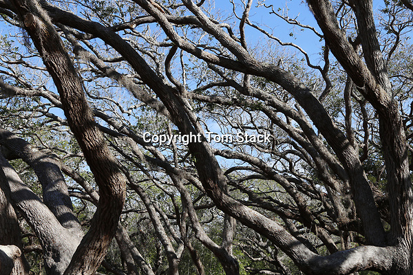 A dense, complex patters of branches in a forest
