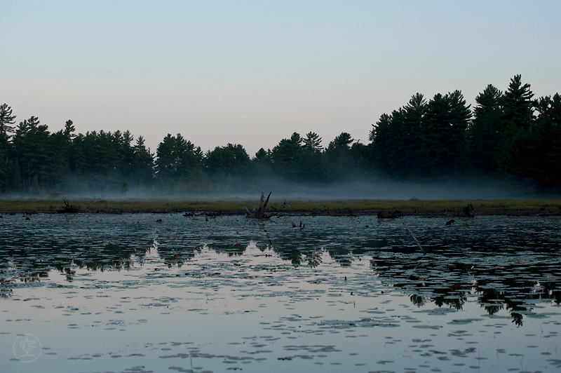 Morning mist on the marsy shores of Balsam Lake, Killarney Provincial Park, Ontario, Canada