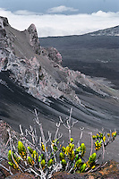 This plant struggling for survival represents the harsh conditions of the wilderness landscape in HALEAKALA NATIONAL PARK on Maui in Hawaii