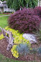 Acer palmatum tree, Lamium, Festuca, house