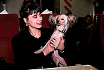 CRUFTS JANEAVE NAYLOR ON THE TRAIN HOME WITH HER CHINESE CRESTED HAIRLESS POOCH CALLED MOONSWIFT MOSAIC 1990S HOMER SYKES