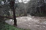 High water in Big Creek near Davenport, CA