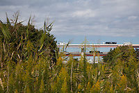 Expressway Overpasses seen above riverside vegetation alongside the Arakawa River near Kita Senju, Tokyo, Japan. Friday October 12th 2014