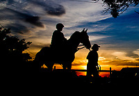 BALTIMORE, MD - MAY 18: Preakness contender Senior Investment heads back from a busy track as preparations are in full swing for the Preakness Stakes this Saturday at Pimlico Race Course on May 18, 2017 in Baltimore, Maryland.(Photo by Scott Serio/Eclipse Sportswire/Getty Images)