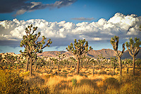 Enchanted Forest - Joshua Tree National Park, CA