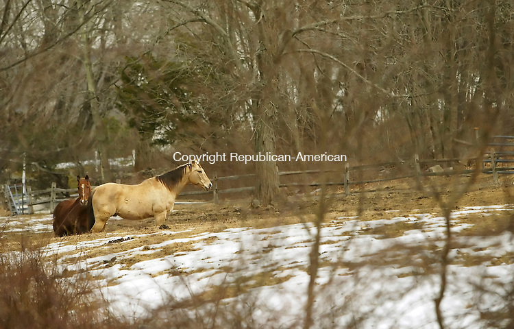 BETHLEHEM, CT, 03/13/07- 031307BZ04- FOR COUNTRY LIFE ONLY.<br /> Horses graze in a field along Guilds Hollow Road in Bethlehem Tuesday.<br /> Jamison C. Bazinet Republican-American