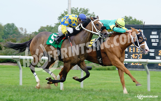 Peg's Olympic Zoie winning at Delaware Park on 9/18/14