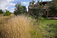Pennisetum spathiolatum flowering groundcover ornamental grass in park next to California home with lawn grass