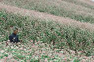 September, 1985. Shaanxi Province, China. Buckwheat flowers near Lijiawan village on the road from Zhidan to Yan'an.