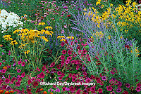 63821-08910 Wave Petunias, Black-eyed Susans & Garden Phlox in flower garden, Marion Co., IL