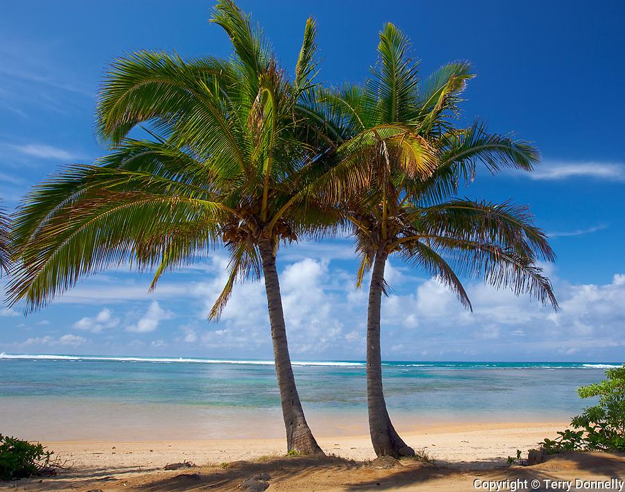 Kauai, Hawaii<br /> Two palm trees frame a stretch of Anini beach on the north shore of Kauai