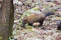 Ecuador, Prov. Zamora-Chinchipe, Tapichalaca Biologica Reserve