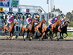 June 18, 2011.Horses breaking from the gate for the Vanity Handicap at Hollywood Park, Inglewood, CA.