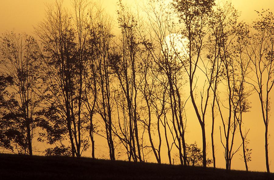Trees silohuetted against sunrise through fog, Lyndon, Caledonia County, VT