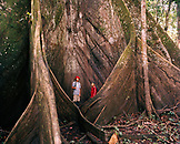 PERU, Amazon Rainforest, South America, Latin America, two boys standing by Kapok tree