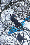 Lara one fo the last protestors to be  removed from the trees  at the decoy pond Combe Haven . Bexhill - Hastings Bypass..There's a huge security prescence -.Around 100  police and  turned up and security .  15 people remain in the trees. East Sussex countly council pushing for the road to  be built   refused to allow food and  medicine into the trees.  The  tree protesters sat out  3 nights of gales and  rain