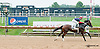 Celtic Tigress winning at Delaware Park on 8/28/2013