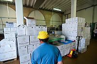 Galatina - Cantine Aperte 2010 - Azienda Agricola Valle dell'Asso - Ormai le botti sono state svuotate, il vino imbottigliato viene conservato nei cartoni pronti per essere immessi sul mercato