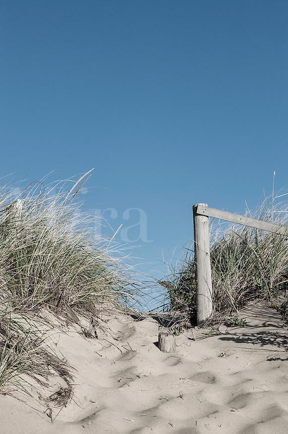 Dune path to the beach, Cape Cod, Massachusetts, USA