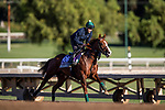 OCT 29: Breeders' Cup Juvenile Turf Sprint entrant Band Practice, trained by Archie Watson,  at Santa Anita Park in Arcadia, California on Oct 29, 2019. Evers/Eclipse Sportswire/Breeders' Cup